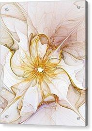 Golden Glow Acrylic Print by Amanda Moore