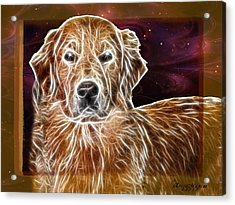 Acrylic Print featuring the photograph Golden Glowing Retriever by EricaMaxine  Price