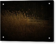 Acrylic Print featuring the photograph Golden Grass by Ryan Photography