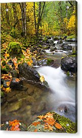 Golden Grove Acrylic Print by Mike  Dawson