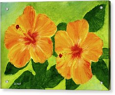 Golden Hawaii Hibiscus Flower #25 Acrylic Print by Donald k Hall