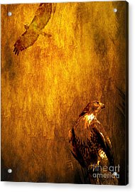 Golden Hawk 4 Acrylic Print by Wingsdomain Art and Photography
