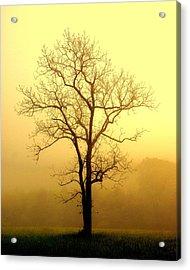 Golden Haze Acrylic Print by Marty Koch