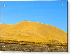 Golden Hill Acrylic Print
