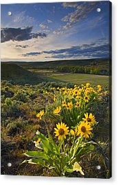 Golden Hills Acrylic Print by Mike  Dawson