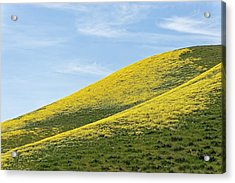 Golden Hills Of California Acrylic Print