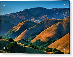 Golden Hills Acrylic Print by Steven Ainsworth