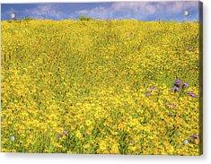 Acrylic Print featuring the photograph Golden Hillside by Marc Crumpler