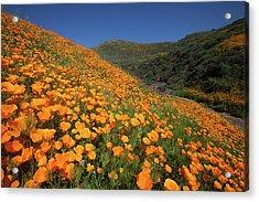 Acrylic Print featuring the photograph Golden Hillsides by Cliff Wassmann