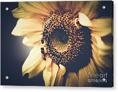 Acrylic Print featuring the photograph Golden Honey Bees And Sunflower by Sharon Mau