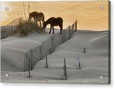 Golden Horses Acrylic Print