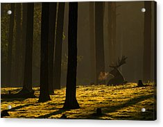 Golden Hour Acrylic Print by Andy Luberti