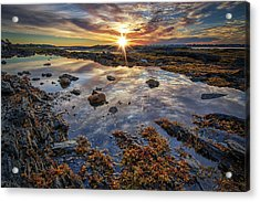 Golden Hour At Pott's Point Acrylic Print