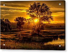 Acrylic Print featuring the photograph Golden Hour by Fiskr Larsen