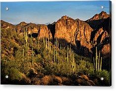 Acrylic Print featuring the photograph Golden Hour On Saguaro Hill  by Saija Lehtonen
