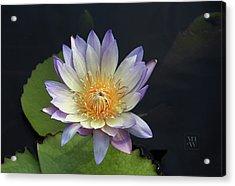 Golden Hue Acrylic Print