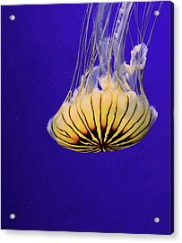 Golden Jellyfish Acrylic Print