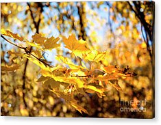 Acrylic Print featuring the photograph Golden Leaves by Ivy Ho