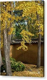Golden Leaves Acrylic Print by Jamie Pham