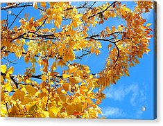 Golden Leaves Ll Acrylic Print