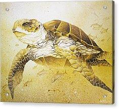Golden Loggerhead Acrylic Print