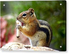 Acrylic Print featuring the photograph Golden-mantled Ground Squirrel by Perspective Imagery