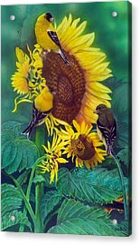 Golden Morning  Sold Acrylic Print