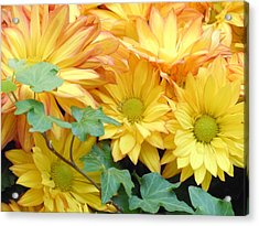 Golden Mums And Ivy Acrylic Print