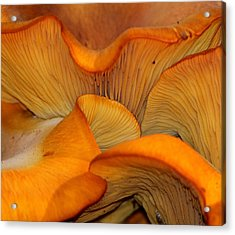 Golden Mushroom Abstract Acrylic Print