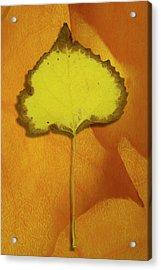 Golden Oldie Acrylic Print