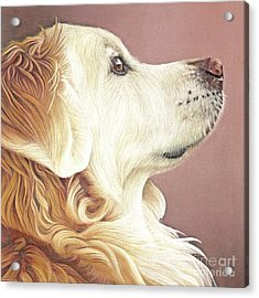 Acrylic Print featuring the painting Golden Oldie by Donna Mulley