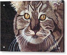 Golden One Acrylic Print