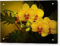 Golden Orchids Acrylic Print