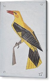 Golden Oriole Acrylic Print by Tamara Savchenko