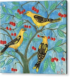 Golden Orioles In A Cherry Tree Acrylic Print by Sushila Burgess