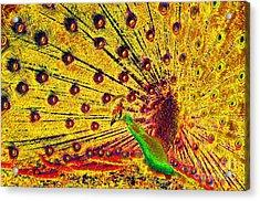 Golden Peacock Acrylic Print by David Lee Thompson