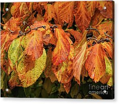Acrylic Print featuring the photograph Golden by Peggy Hughes