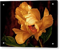 Acrylic Print featuring the photograph Golden Peony by Julie Palencia