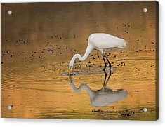 Golden Pond Acrylic Print