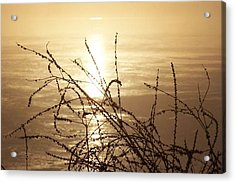 Golden Pond Acrylic Print by Laurie Prentice