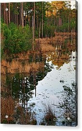 Acrylic Print featuring the photograph Golden Pond by Lori Mellen-Pagliaro