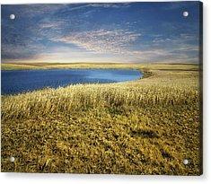 Golden Prairie Acrylic Print