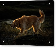 Acrylic Print featuring the photograph Golden by Randy Hall