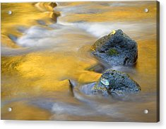 Golden Refuge Acrylic Print by Mike  Dawson