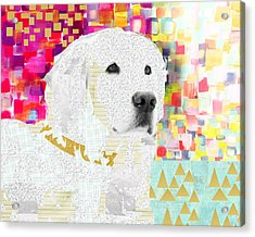 Golden Retriever Collage Acrylic Print by Claudia Schoen