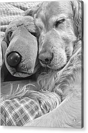 Golden Retriever Dog And Friend Acrylic Print by Jennie Marie Schell