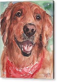 Golden Retriever Dog In Watercolori Acrylic Print by Maria's Watercolor