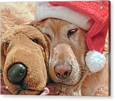 Golden Retriever Dog Santa Hat And Friend Acrylic Print by Jennie Marie Schell