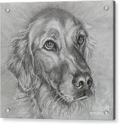 Golden Retriever Drawing Acrylic Print by Susan A Becker