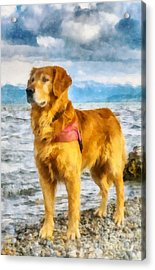 Golden Retriever Acrylic Print by Esoterica Art Agency